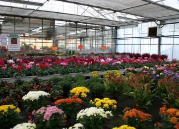 plantes_exterieur_2