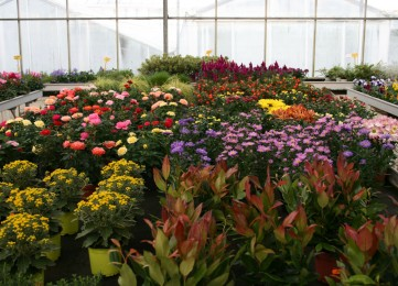 plantes exterieur 3