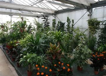 plantes_verte_13